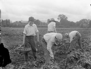 Pupils tend to a school garden. Image via Imperial War Museum via www1schools.com